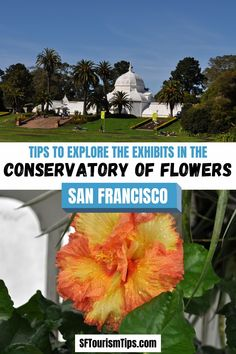 See pictures and find visiting tips for the San Francisco Conservatory of Flowers. This living museum is inside Golden Gate Park. #goldengatepark #sanfranciscomuseums #sanfranciscowithkids Flowers San Francisco, San Francisco With Kids, San Francisco Neighborhoods, San Francisco Museums, San Francisco Photography, Stuff To Do, Things To Do, Golden Gate Park, See Picture