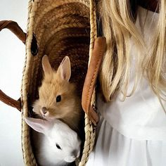 Things that make you go AWW! Like puppies, bunnies, babies, and so on. A place for really cute pictures and videos! Cute Creatures, Beautiful Creatures, Animals Beautiful, Animals And Pets, Baby Animals, Cute Animals, Wow Photo, Cute Bunny, Four Legged