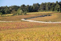 美食の秋はグルメ旅 フランスブルゴーニュでワイン三昧