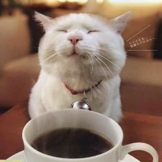 you love coffee and meme's, DONT read this article with a hot coffee in hand. You've been warnedIf you love coffee and meme's, DONT read this article with a hot coffee in hand. You've been warned Coffee Talk, Coffee Is Life, I Love Coffee, Hot Coffee, Coffee Drinks, Funny Coffee, Coffee Lovers, Meme Café, Cat Memes