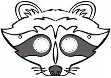 Various Animals - Raccoon, Skunks, bats.  Activities and info