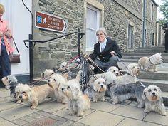 #Dandie Dinmont #Festival in #Selkirk By Simon Parsons #DandieDinmont #dogs