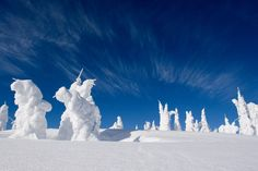 Snow Ghosts at the summit of Silver Star Mountain near Vernon BC, Canada