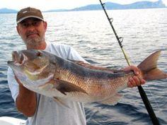 Grosser roter Schapperfisch
