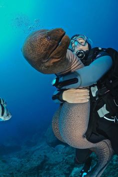 When you're down by the sea and and an eel bites your knee...that's a Moray...