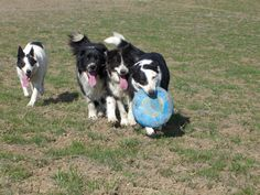 Who wants the frisbee?