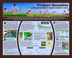 Better Posters: Critique: Flowers and seeds Academic Poster, Research Poster, Action Research, Poster Presentation Template, Presentation Layout, Scientific Poster Design, Poster Design Layout, Poster Designs, Behavioural Ecology
