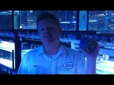 Paul Talbot talks about fish food for www.majesticaquariums