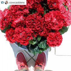 #SperryKASABAda #Repost @cowcaddens Olmazsan olmaz! Büyümez çiçeklerim toprağım havalanmaz kurur gider bahçelerim   @sperrytopsider