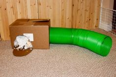Best bunny toy: tube and box stuffed with crumpled paper. Rabbit Toys, Pet Rabbit, Bunny Toys, Bunny Bunny, Bunnies, Guinea Pig Care, Guinea Pigs, All About Rabbits, Bunny Supplies