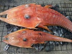 Armoured sea robins The prehistoric-looking fish shocked fishermen who had never seen the underwater creatures...