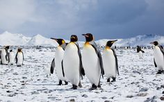 to north pole - Google Search