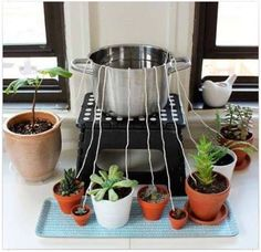 If you're going away on vacation, place a pot on a step stool on your counter your succulents around the step stool, wet & run strings from the pot to the plants (tuck into each pot), fill the pot with water & the water will leach down to the plants.