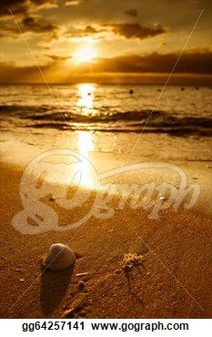 """Waves Approaching Sea Shell on Beach During Sunset"" - Beach Stock Photo from Go Graph"