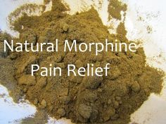 Making Wild Lettuce Pain Relief Medicine Powder - natural - Natural Health Remedies, Natural Cures, Herbal Remedies, Natural Healing, Natural Foods, Natural Treatments, Natural Beauty, Healing Herbs, Medicinal Plants