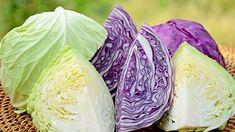 Zelí patří k vynikajícím zdrojům vitamínů. Types Of Cabbage, Raw Cabbage, Cabbage Head, Purple Cabbage, Cabbage Leaves, Cabbage Juice Benefits, Cabbage Juice For Ulcers, Fermented Cabbage, Skin Nutrition