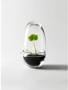 Miniväxthus Grow | Design House Stockholm. The simple beauty in organic life like this makes me smile