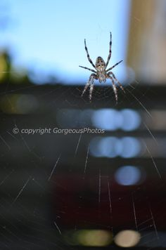 Spider Man by GorgeousPhotos on Etsy, $15.00