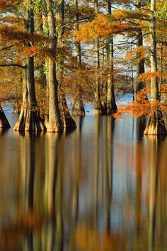 Cypress trees Canoeing, boating or just biking by ethereal Clark's mill pond a mile down the hill from my home place