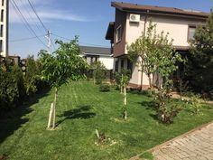 Buftea – Samurcasi – Lacul Manastirea, vila deosebita, P+1+Pod Sidewalk, Plants, Lawn, Bamboo, Side Walkway, Walkway, Plant, Walkways, Planets