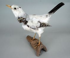 Taxidermy Black Bird, antique mixed metal components. by Lisa Black