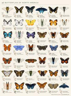 Wahrscheinlich kennen die meisten von uns nicht mal alle einheimischen Schmetterlinge mit Namen. Nun geht es gleich mal weiter nach Nordamerika. Da gibt es auch eine Menge interessanter und hübscher Falter. Und die haben auch alle sehr farbenfrohe Namen, w
