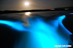 Luminous Lagoon Montego Bay, Jamaica. The microbes in the water react at night time to create the glow