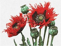 Poppies photo stitch free embroidery design 22 - Photo stitch embroidery designs - Machine embroidery community
