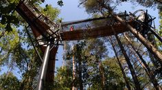 Germany Treetop Trail