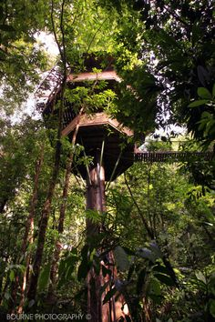 Finca Bellavista in Costa Rica is a lush, 600-acre property of private treehouses connected by bridges and ziplines.