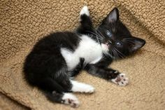 This little girl who hasn't grown into her bed yet. | 39 Overly Adorable Kittens To Brighten Your Day