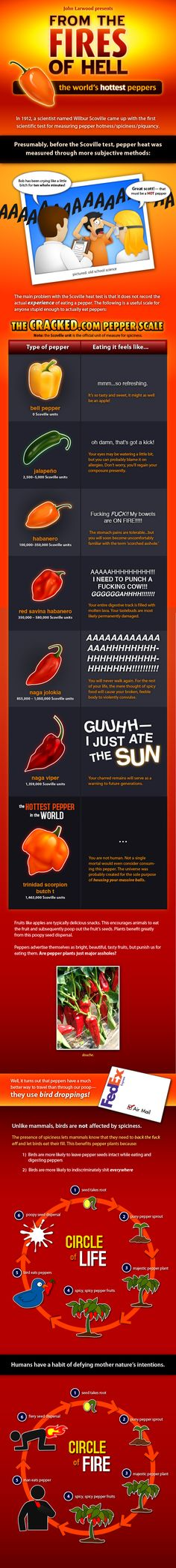 What's the World's Hottest Pepper? Hot Pepper Chart, Worlds Hottest Pepper, Coconut Oil Weight Loss, Some Like It Hot, Weight Loss Diet Plan, Stuffed Hot Peppers, Good To Know, Planer, Cooking Tips