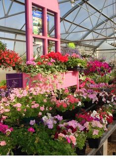 We arrange our greenhouse by color so it's easy to pick out the plants in your favorite color family. Our window box displays will help you find the right shade! Small Greenhouse, Greenhouse Plans, Garden Center Displays, Garden Centre, Garden Shop, Different Plants, Growing Herbs, Window Boxes, Green Plants