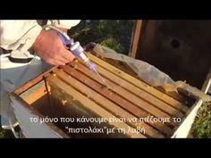 MELISSOCOSMOS: Μελισσοκομία για Αρχάριους: 4 βασικές κινήσεις για επιτυχημένο ξεχειμώνιασμα! Από το melissopolis