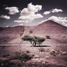© bernhard quade Morocco Tree Anti Atlas M 07-10-11 14-01