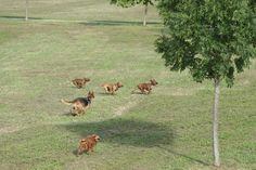 3+2 cani corsa