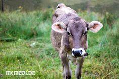 Markus Medinger Picture of the Day | Bild des Tages 14.08.2017 | www.mkmedi.de #mkmedi  Eine Kuh macht muh viele Kühe machen mühe  #kuh #kalb #niedlich #cow #calf #cute  #natur #nature #animallovers #pets_of_instagram #petstagram #petsagram #tiere #animals  #allgäu #allgäutourist #visitbavaria #bavaria #landscape_lovers #deinbayern  #photography #photo #art #photographer  #pictureoftheday #bilddestages #365picture  @allgaeu.de @allgaeutourist @bayern @badenwuerttemberg @visitbawu @wirzeigens