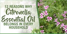 Most people are familiar with citronella essential oil because of its amazing ability to repel mosquitoes. In fact, citronella essential oil is capable of so much more than keeping annoying mosquitoes away in the summertime. This essential oil is packed with impressive health benefits.