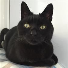 Paddy - Cat Rehoming & Adoption - Wood Green Animals Charity