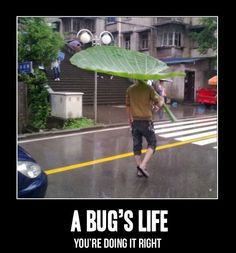 Well, now I'll never find an umbrella that I'm happy with...