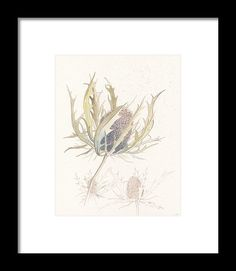 Sea Holly original ink and watercolour study painting illustration reproduction print by Lisa Le Quelenec part of the seedheads collection. Sea Holly, Pen And Wash, Nature Study, Framed Prints, Art Prints, Watercolours, Great Artists, Vintage World Maps, Lisa