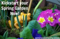 Use recycled items and some pretty primrose for an instant punch of color in your spring planters.
