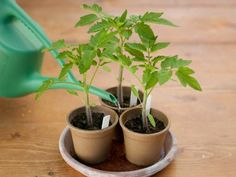 Follow these easy steps from HGTV to plant seeds in small pots.