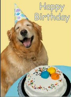 Top Happy Birthday Dog Images for Animal Lovers Happy Birthday Animals, Happy Birthday Dog, Animal Birthday, Husband Birthday, Happy Birthday Cards, Birthday Fun, Birthday Greetings, Birthday Ideas, Birthday Pictures
