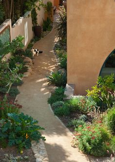 pathway - decomposed granite - water wise plants - drought tolerant garden - windy path - side yard - rock wall - boulders - black and white cat zucchini plant Water Wise Landscaping, Side Yard Landscaping, Landscaping With Rocks, Landscaping Plants, Landscaping Ideas, Hillside Landscaping, Mailbox Landscaping, Backyard Ideas, Santa Barbara