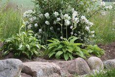 Tuhat ja yksi puutarhaunelmaa: heinäkuu 2011