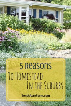 Modern homesteading is the act of transforming a household from a unit of consumption to a unit of production. Here are 5 reasons why homesteaders in the suburbs are making the switch.
