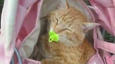 cat collars safety