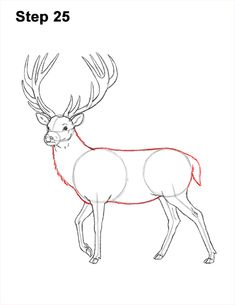 Learn how to draw a Red Deer with this how-to video and step-by-step drawing instructions. Horse Drawings, Cool Art Drawings, Animal Drawings, Easy Drawings, Deer Drawing Easy, Hirsch Silhouette, Easy Christmas Drawings, Deer Antler Crafts, Deer Sketch