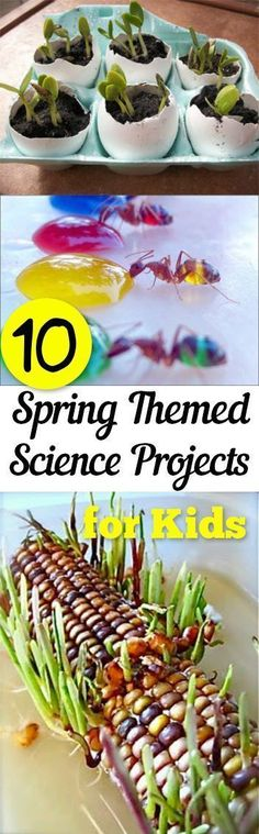 Science Projects for Kids, Kid Stuff, Educational Activities for Kids, Science Projects, Spring Science Projects, Educational Crafts for Kids, Crafts for Kids, Easy Activities for Kids, Popular Pin #kidscrafts